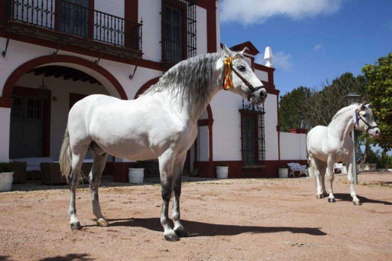 la carreña finca jerez caballos
